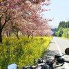 富士と桜を写真に収めたい!ツーリング_その2