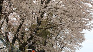 富士と桜を写真に収めたい!ツーリング。